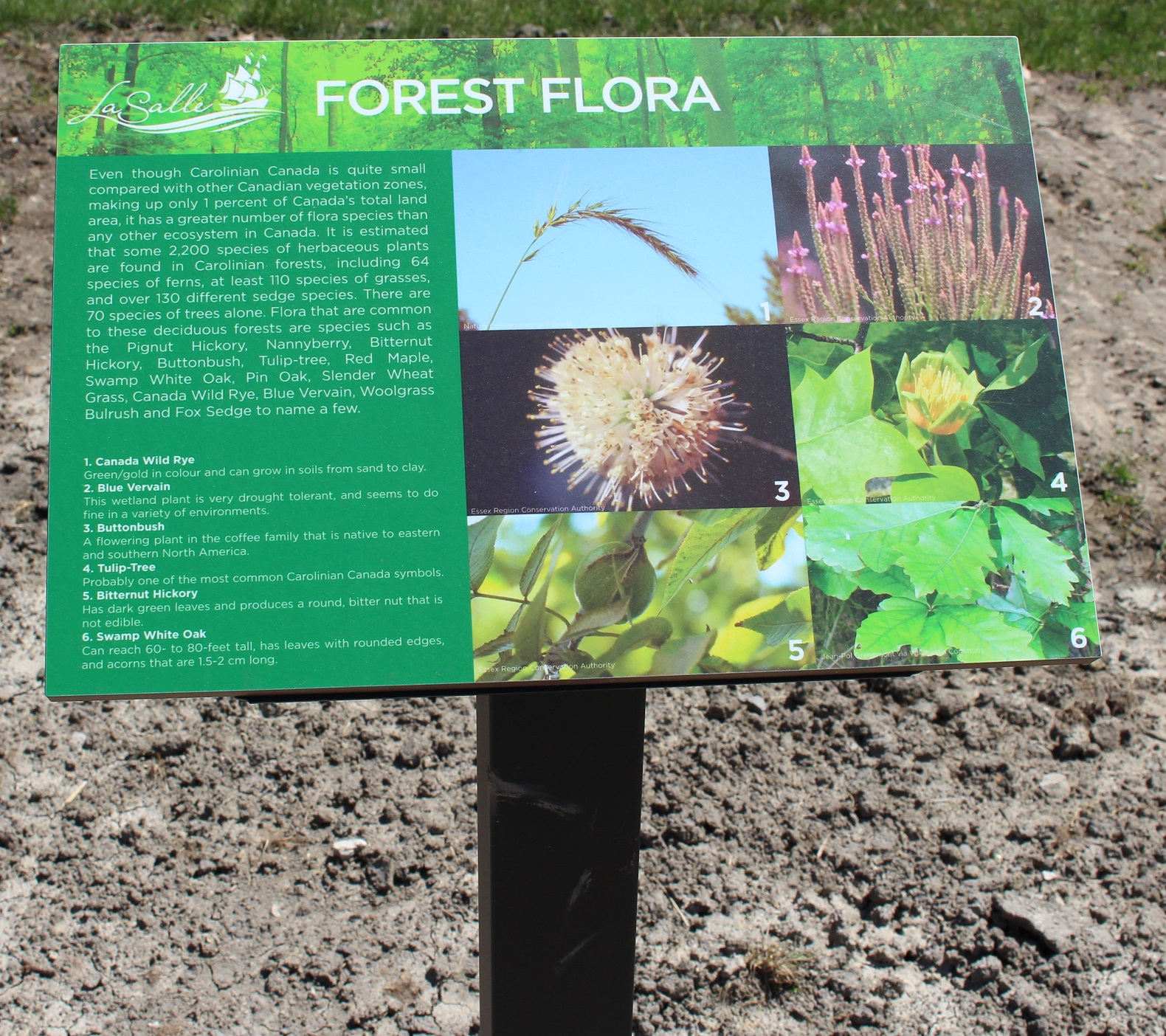 Gilbert Park Trail Sign of Forest Flora